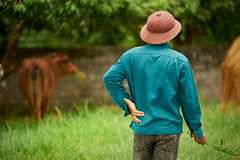 Farmer watching his cow