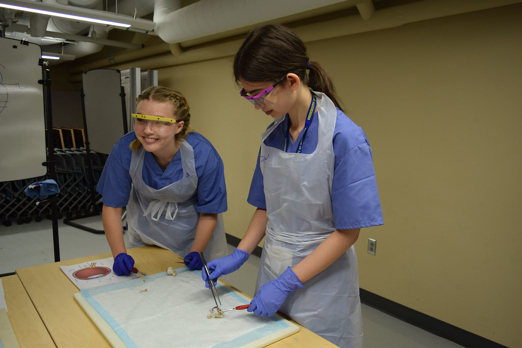 High school students in the Explorations in Pathology pre-college program at the University of Rochester participated in an ocular dissection lab on Friday, July 20, 2018.