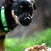 Puppy, Chowing Down