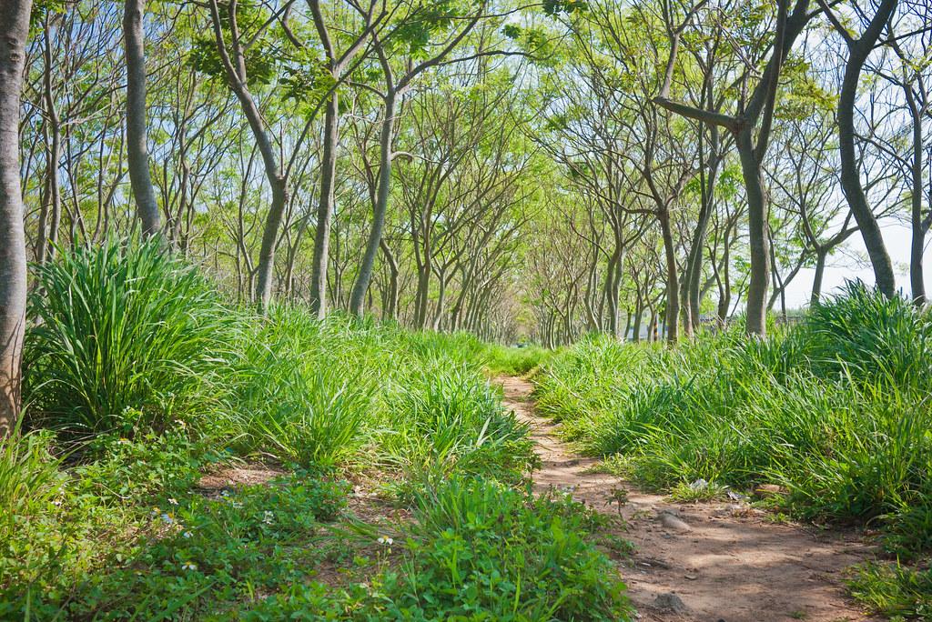 【台中旅遊景點推薦】后里龍貓隧道 - 無患子森林 無人圖
