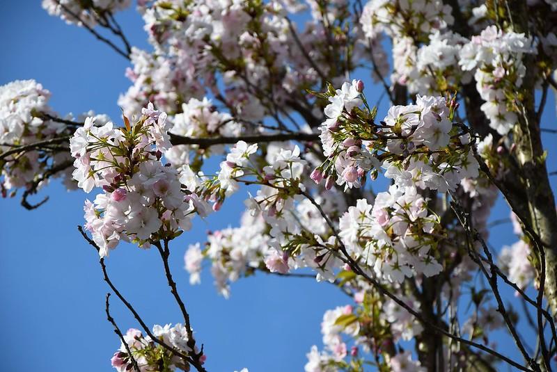 Flowering Tree 20.04 (1)