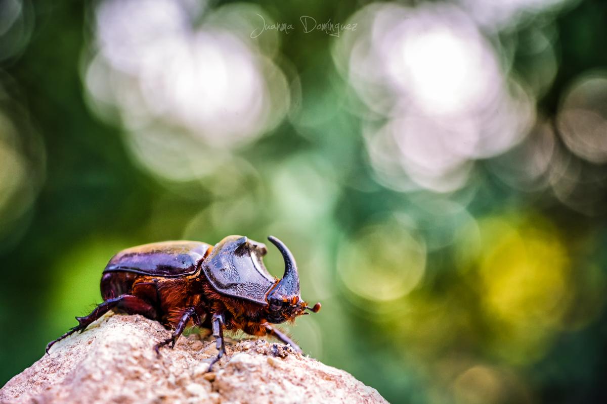 """02.- """"Escarabajo Rinoceronte"""" - Desingrapher"""