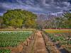 Photo:チューリップの花園で VII By jun560
