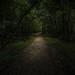 Congraree National Park, South Carolina HDR