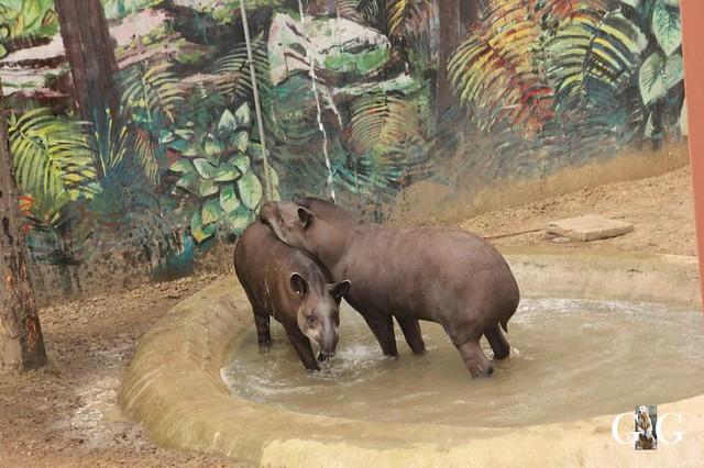 Besuch Zoo Sosto 18.06.201893