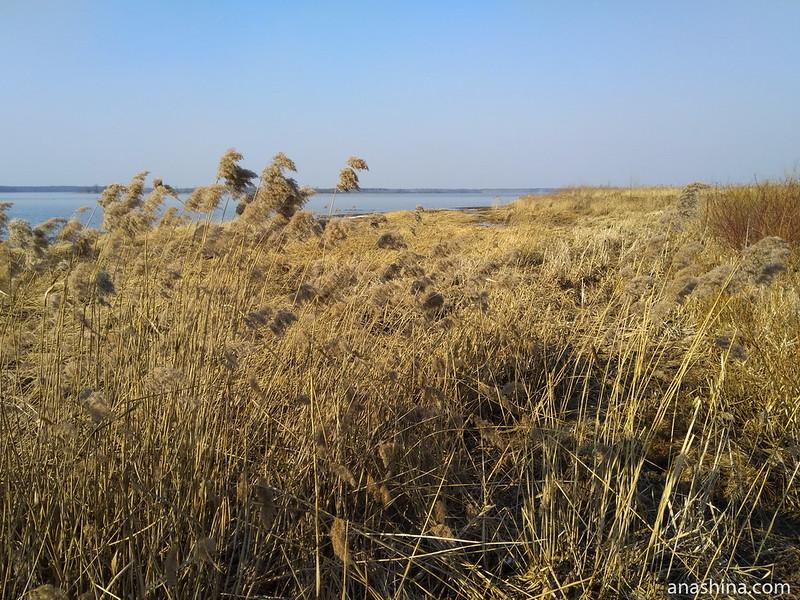 Прибрежная растительность, Иваньковское водохранилище
