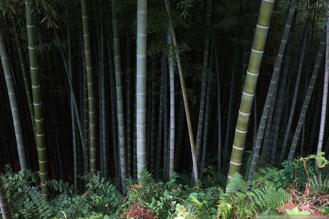 Dark bamboo forest