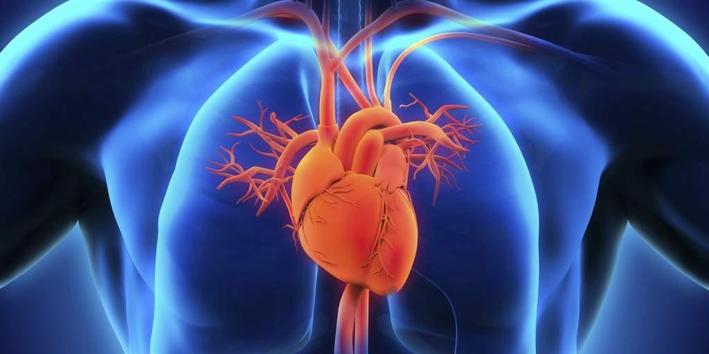 Des valves cardiaques prothétiques plus efficaces grâce aux libellules