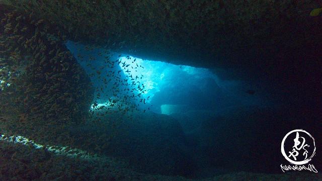 洞窟の中にはウスモモテンジクダたイたち