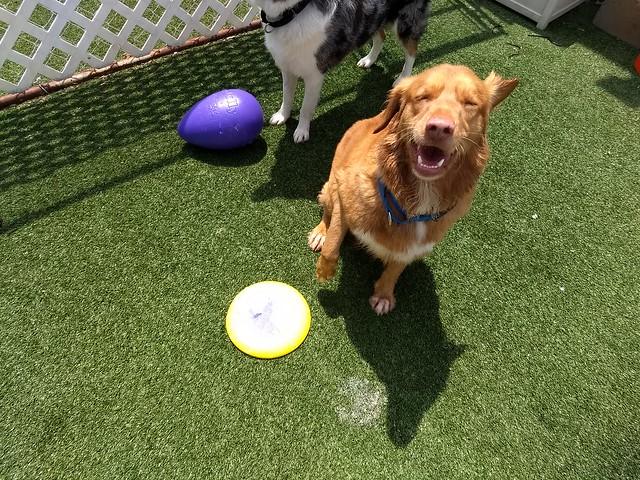 Frisbee Fun 07-01-18