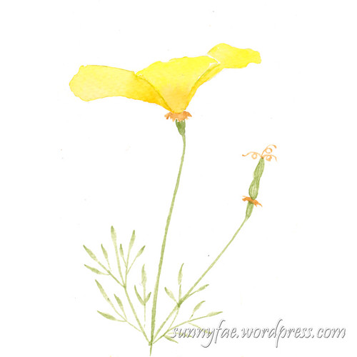 watercolour of Californian poppy