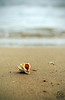 Shell in the seashore by photoschete.blogspot.com