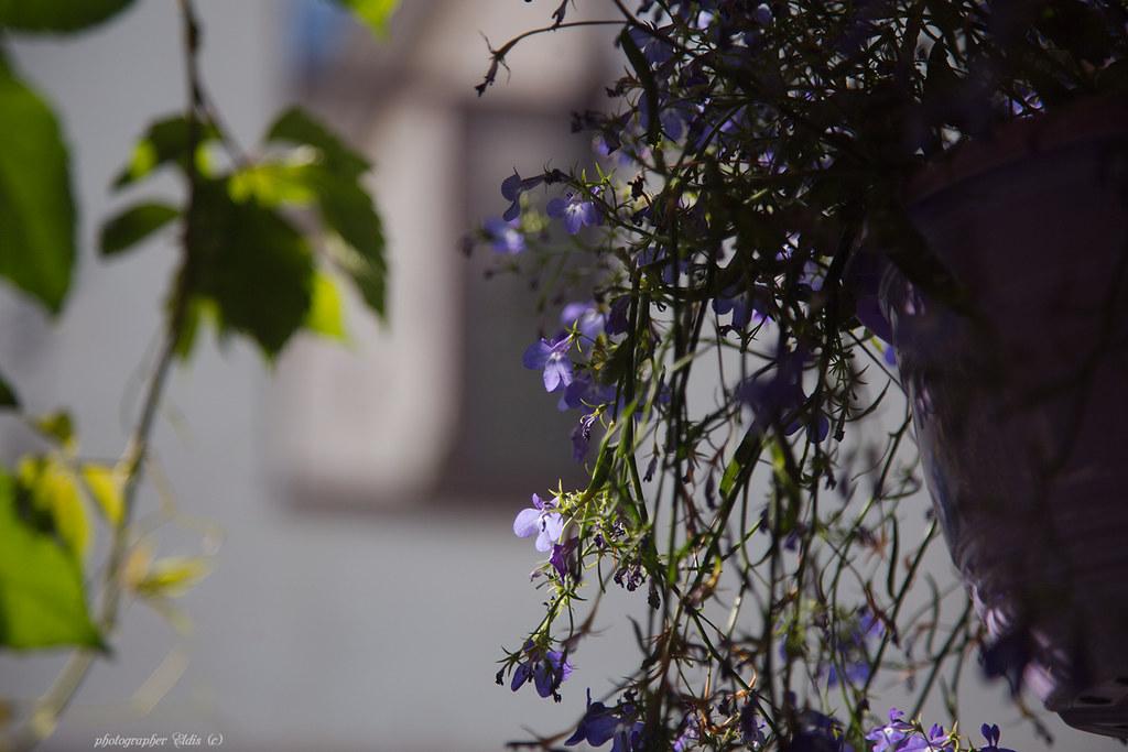 IMG_3781_edit
