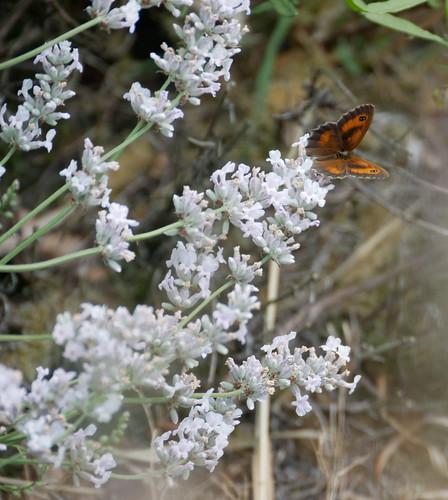 Butterfly Perch