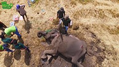 Vets attempt to save an extremely sick elephant