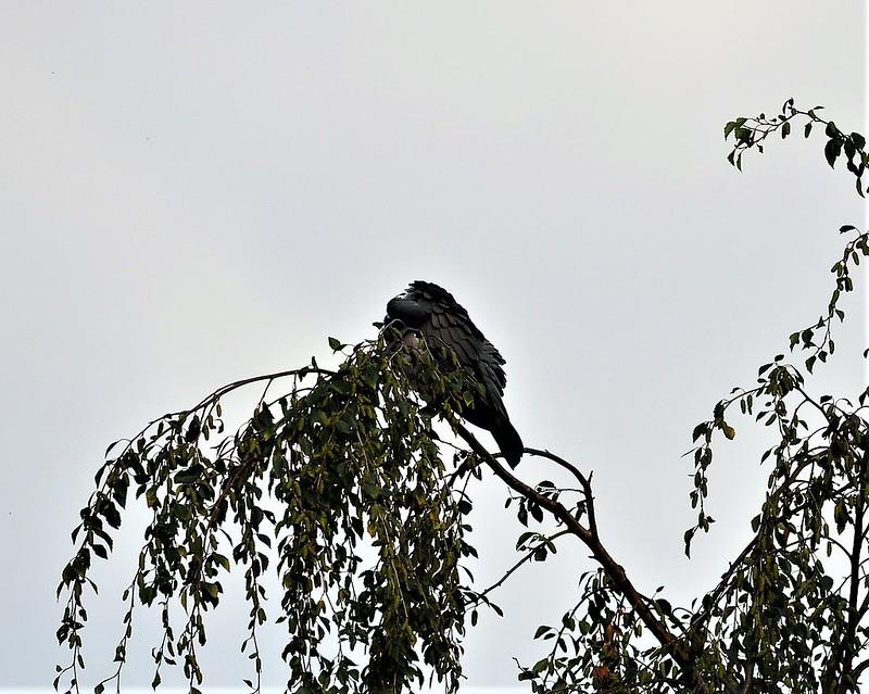 Big Bird 06.07 (5)