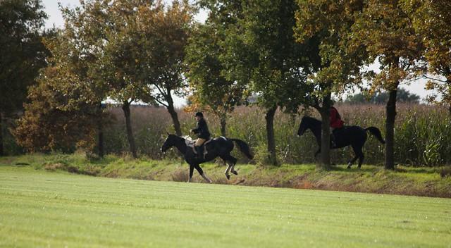 Midland Hunt Landhorst 2015-9104