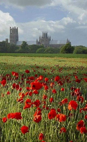 Wild Flowers Inspiration : field of red poppys with Ely Cathedral, Cambridgeshire, England in the backgroun…