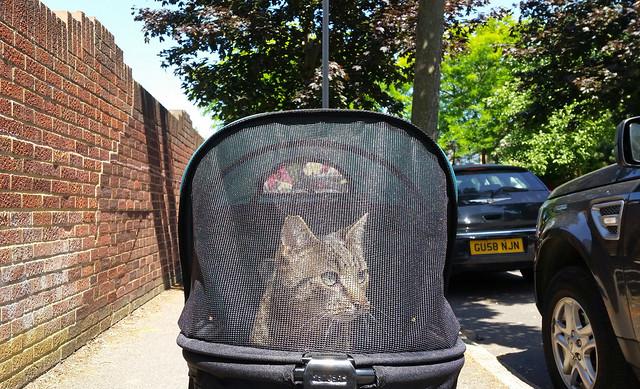 Gabriel in Cat Stroller