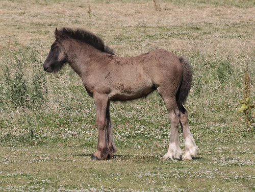 Foal is growing into its legs