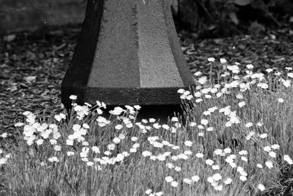 Pink Flowers and Lamppost | Pink flowers surround the base o