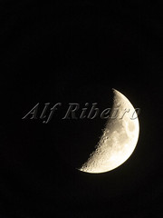 Alf Ribeiro 0253-12