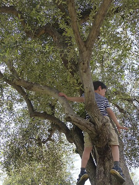 enfant dans l'olivier