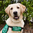 Guide Dogs for the Blind's buddy icon