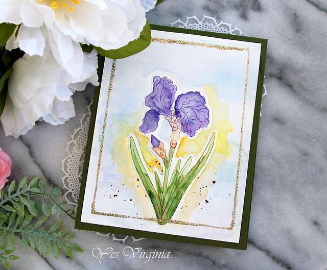 Iris-001