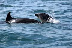 Dolphin Survey trip 14th Apr 2018