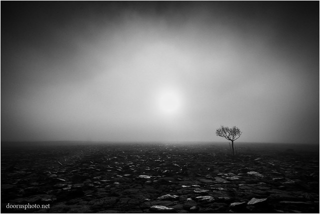 Lonely Tree Sunrise