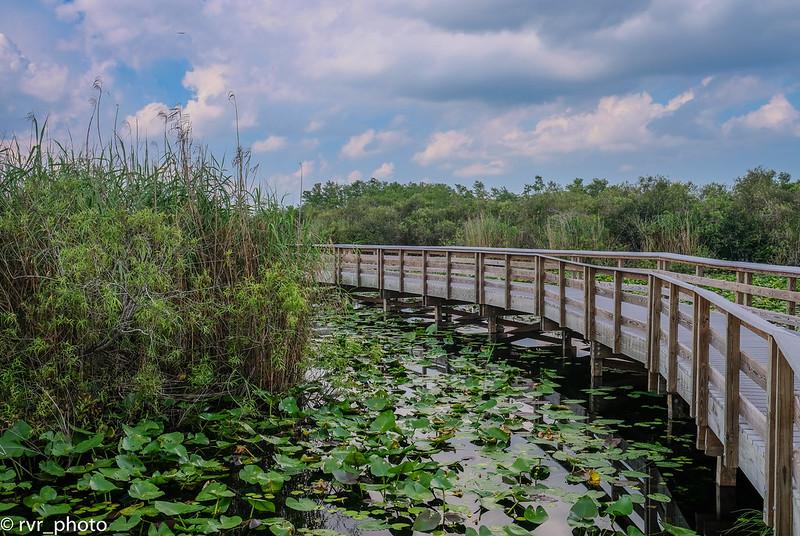 Everglades NP - Royal Palm