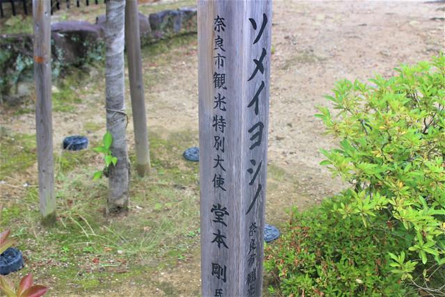 seidaiji003