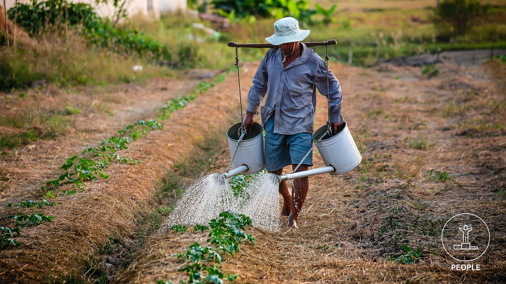 A man watering crops in a dry field.