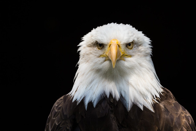 Mr Straight Face, Canon EOS-1D X, Canon EF 500mm f/4L IS