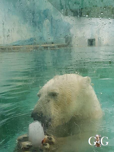 Besuch Zoo Sosto 18.06.201819