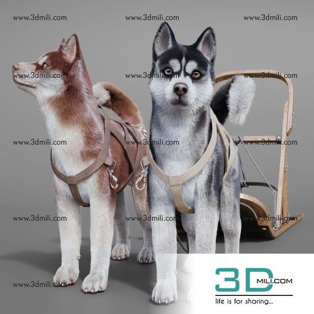 12  Dog 3dsmax Model Free Download - 3D Mili - Download 3D