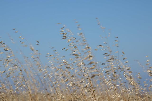 Grasses, Canon EOS REBEL T6I, Canon EF 75-300mm f/4-5.6 USM