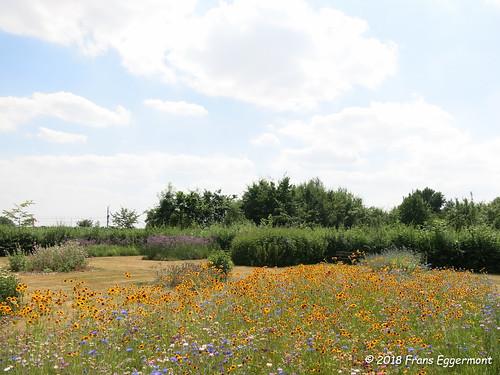 IMG_2218 - Vlindertuin Vichte - Butterfly Garden