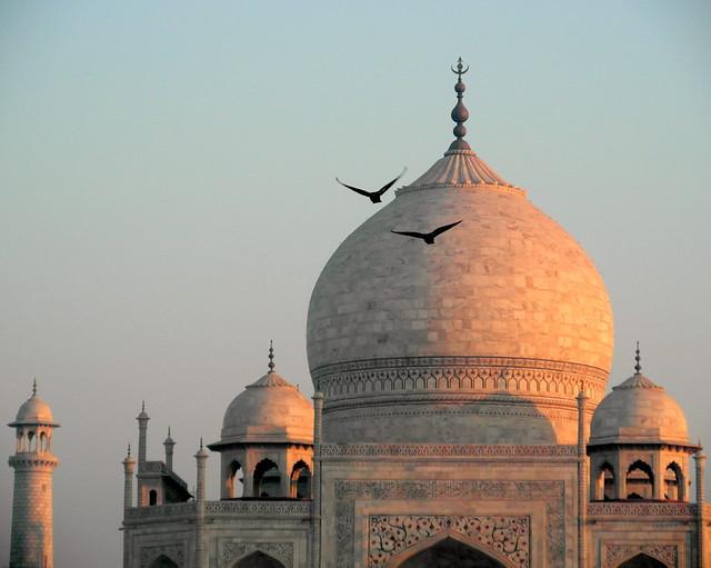 two birds flying over taj mahal