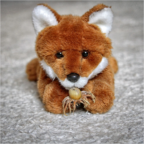 Foxi and his Hazelnut