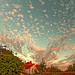 Summer Evening Sky