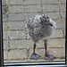Little Seagull Story