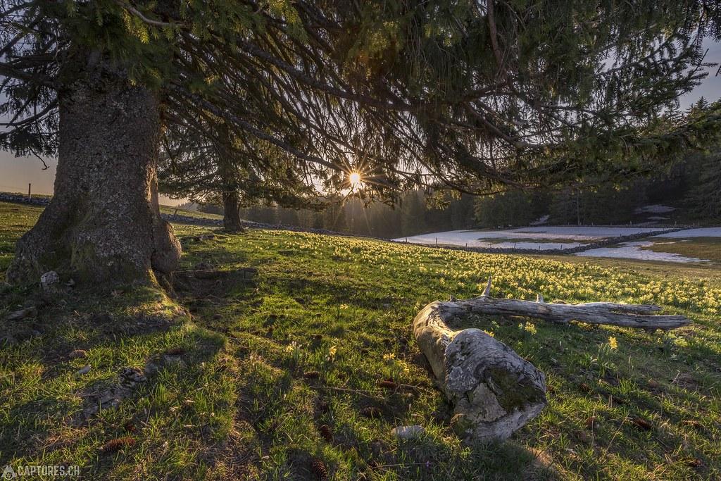 The trees - Tete de Ran