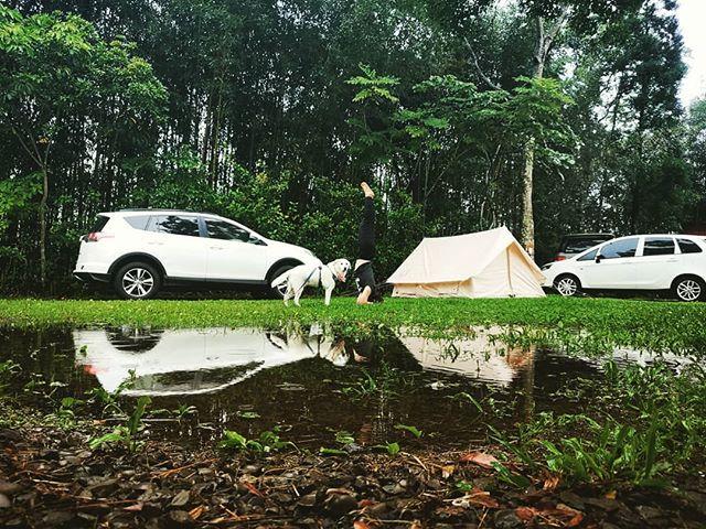 20180707 下午持續下著雨 跟好友們聊天烤肉小酌度過 就在雨快停時 營地積水了 然後 我莫名其妙的又倒立了 #歐北露 #camping #campingheadstand #rainnyday #倒立世界 #一露一倒立 #campingwithdogs #林球子 #攝手老戴