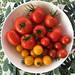 Tomatenvielfalt aus dem Garten