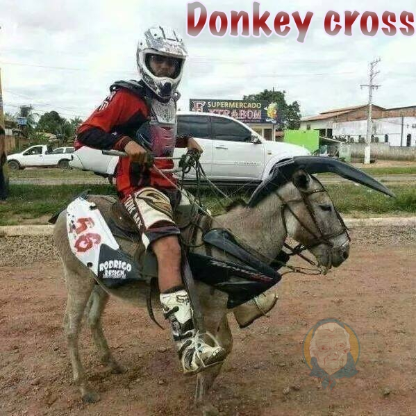 Donkey cross