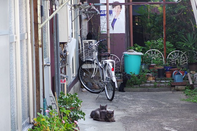 Today's Cat@2018-07-15