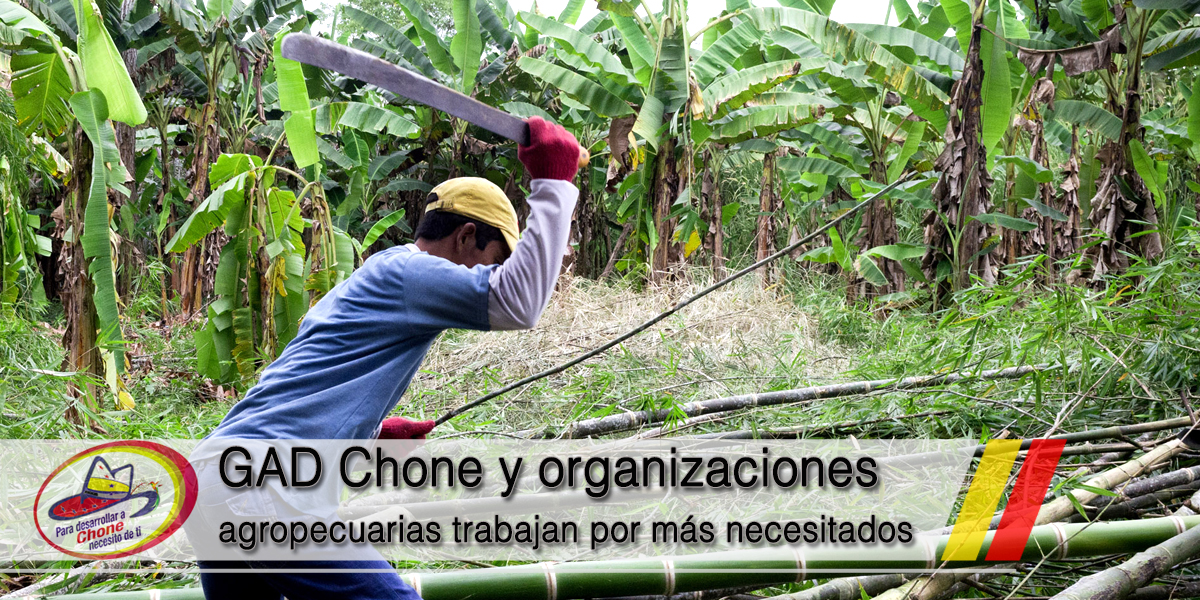 GAD Chone y organizaciones agropecuarias trabajan por más necesitados