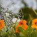 Scotland's Gardens Craigintinney Telferton July 2018 -85